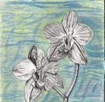 Woodcut Orchid